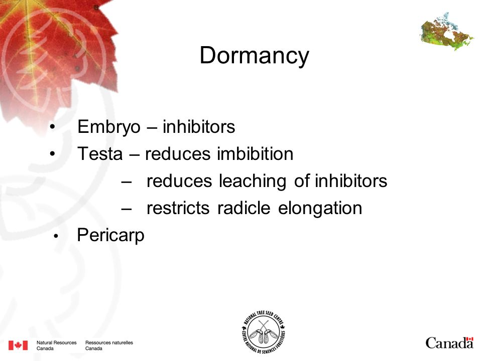 Dormancy Embryo – inhibitors Testa – reduces imbibition – reduces leaching of inhibitors – restricts radicle elongation Pericarp