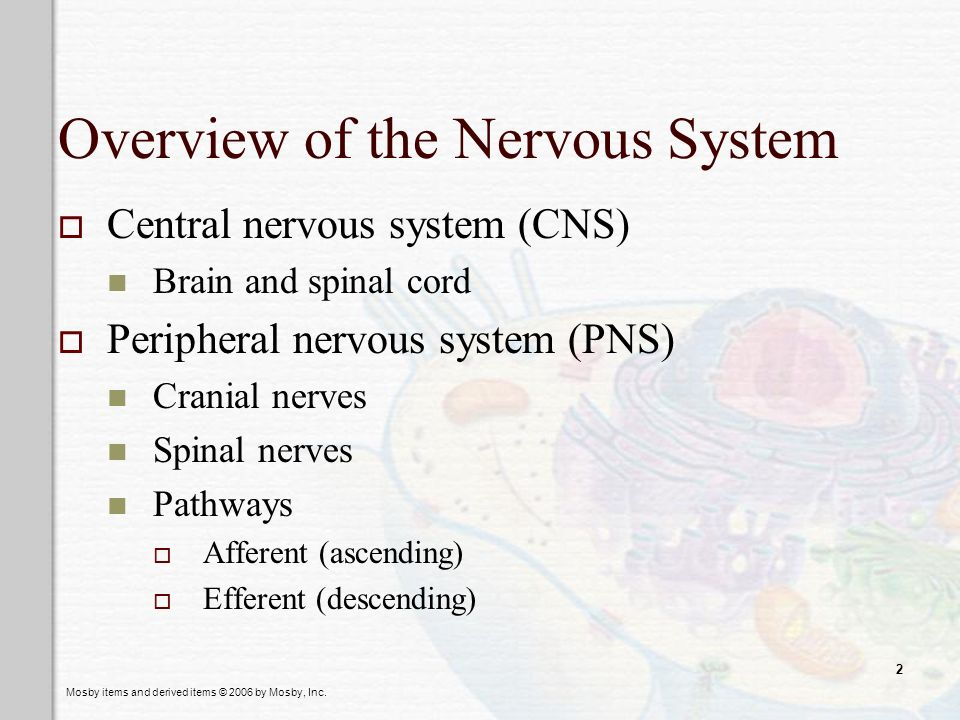 Mosby items and derived items © 2006 by Mosby, Inc. 2 Overview of the Nervous System Central nervous system (CNS) Brain and spinal cord Peripheral ner
