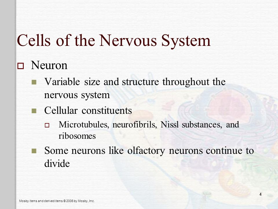Mosby items and derived items © 2006 by Mosby, Inc. 4 Cells of the Nervous System Neuron Variable size and structure throughout the nervous system Cel