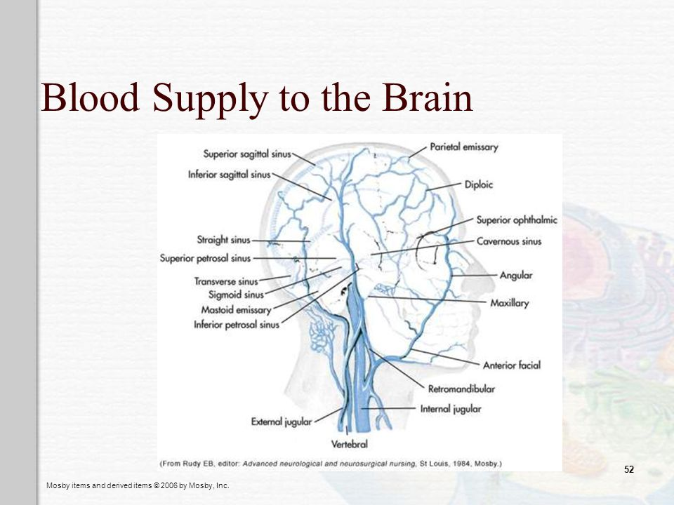 Mosby items and derived items © 2006 by Mosby, Inc. 52 Blood Supply to the Brain