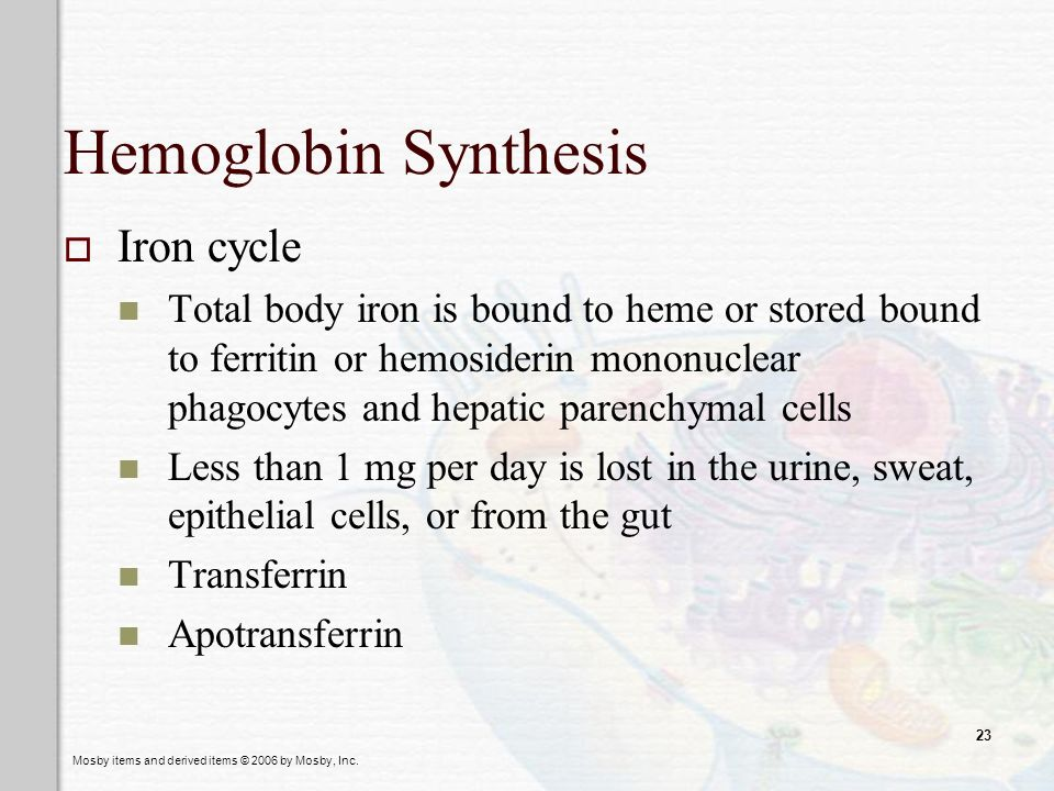 Mosby items and derived items © 2006 by Mosby, Inc. 23 Hemoglobin Synthesis Iron cycle Total body iron is bound to heme or stored bound to ferritin or
