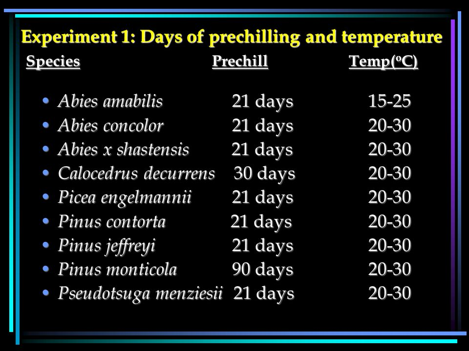 Experiment 1: Days of prechilling and temperature Species PrechillTemp( o C) Abies amabilis 21 days15-25 Abies amabilis 21 days15-25 Abies concolor 21 days 20-30 Abies concolor 21 days 20-30 Abies x shastensis 21 days 20-30 Abies x shastensis 21 days 20-30 Calocedrus decurrens 30 days20-30 Calocedrus decurrens 30 days20-30 Picea engelmannii 21 days20-30 Picea engelmannii 21 days20-30 Pinus contorta 21 days 20-30 Pinus contorta 21 days 20-30 Pinus jeffreyi 21 days20-30 Pinus jeffreyi 21 days20-30 Pinus monticola 90 days20-30 Pinus monticola 90 days20-30 Pseudotsuga menziesii 21 days20-30 Pseudotsuga menziesii 21 days20-30