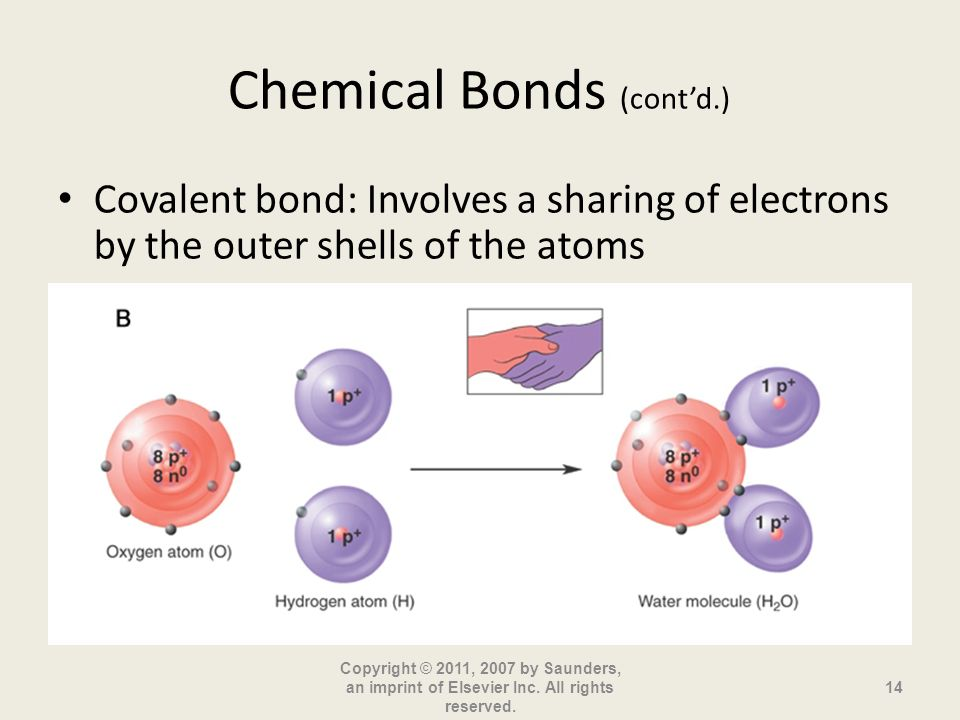 Chemical Bonds (contd.) Covalent bond: Involves a sharing of electrons by the outer shells of the atoms Copyright © 2011, 2007 by Saunders, an imprint