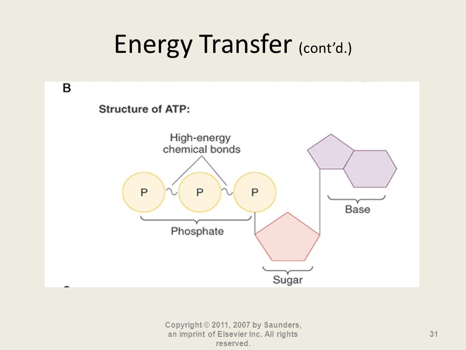 Energy Transfer (contd.) Copyright © 2011, 2007 by Saunders, an imprint of Elsevier Inc. All rights reserved. 31