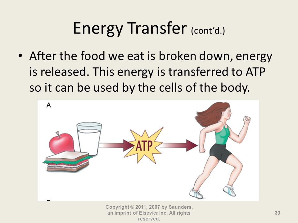 Energy Transfer (contd.) After the food we eat is broken down, energy is released. This energy is transferred to ATP so it can be used by the cells of