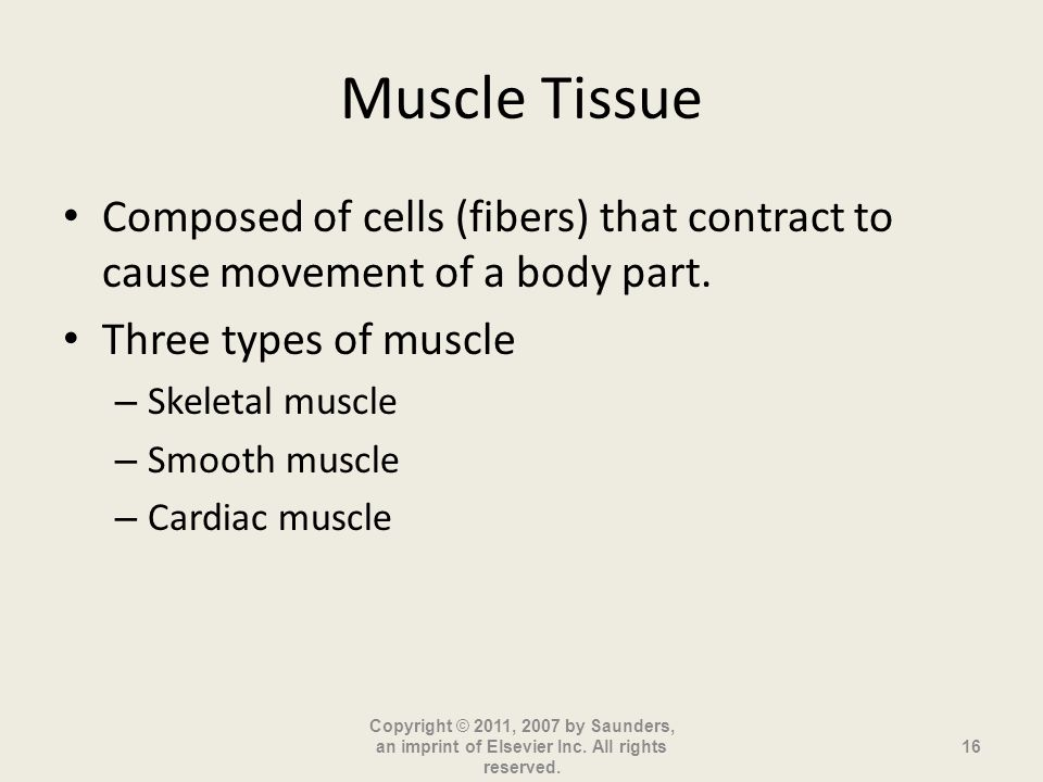 Muscle Tissue Composed of cells (fibers) that contract to cause movement of a body part.