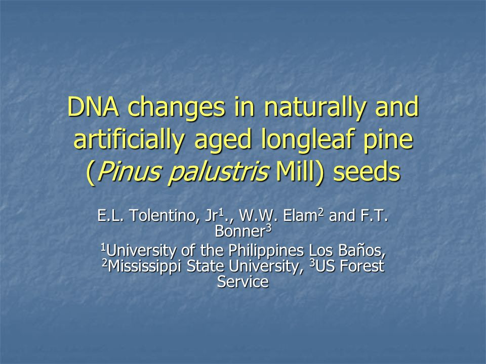 DNA changes in naturally and artificially aged longleaf pine (Pinus palustris Mill) seeds E.L.