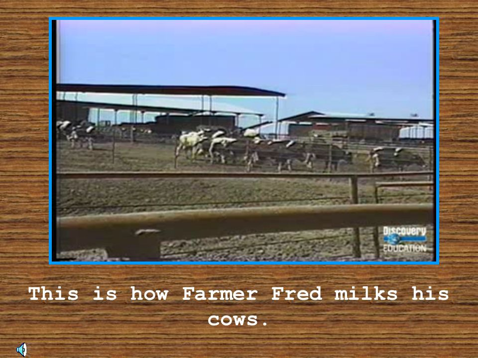 This is how Farmer Fred milks his cows.