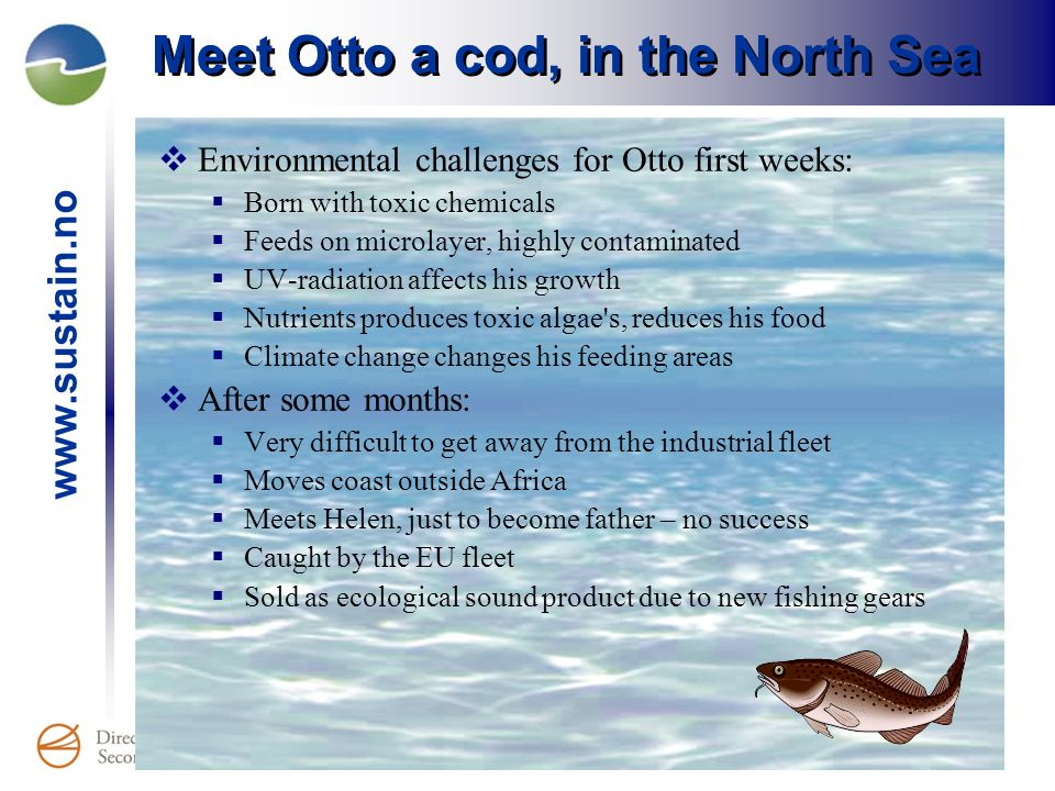 Meet Otto a cod, in the North Sea Environmental challenges for Otto first weeks: Born with toxic chemicals Feeds on microlayer, highly contaminated UV-radiation affects his growth Nutrients produces toxic algae s, reduces his food Climate change changes his feeding areas After some months: Very difficult to get away from the industrial fleet Moves coast outside Africa Meets Helen, just to become father – no success Caught by the EU fleet Sold as ecological sound product due to new fishing gears