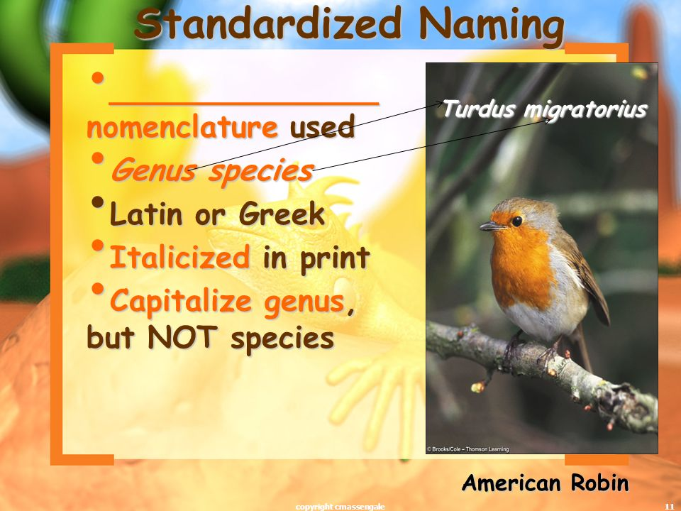 11 Standardized Naming ______________ nomenclature used ______________ nomenclature used Genus species Genus species Latin or Greek Latin or Greek Italicized in print Italicized in print Capitalize genus, but NOT species Capitalize genus, but NOT species Turdus migratorius American Robin copyright cmassengale