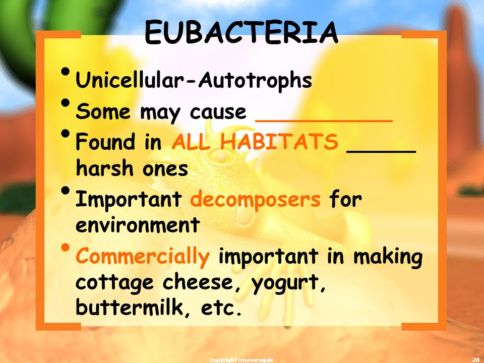 20 EUBACTERIA Unicellular-Autotrophs Some may cause __________ Found in ALL HABITATS _____ harsh ones Important decomposers for environment Commercially important in making cottage cheese, yogurt, buttermilk, etc.