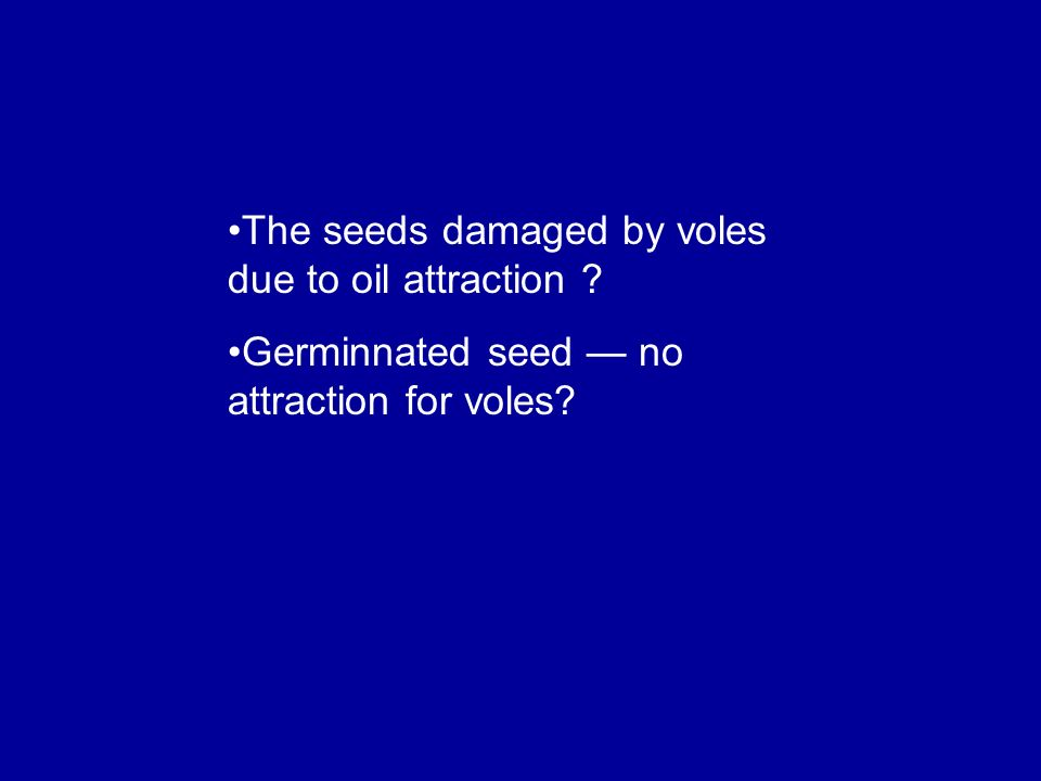 The seeds damaged by voles due to oil attraction ? Germinnated seed no attraction for voles?