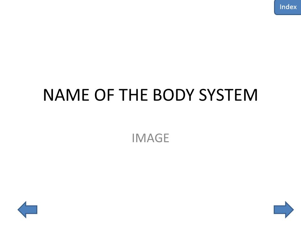 NAME OF THE BODY SYSTEM IMAGE Index