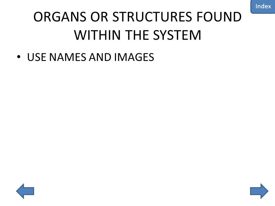 ORGANS OR STRUCTURES FOUND WITHIN THE SYSTEM USE NAMES AND IMAGES Index