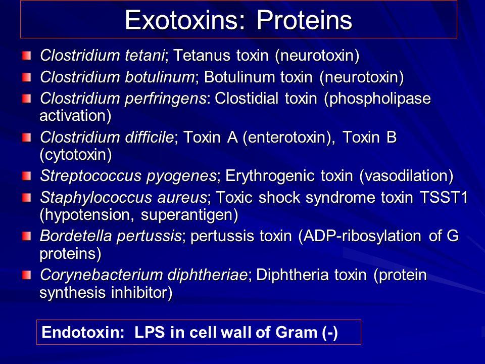 Exotoxins: Proteins Clostridium tetani; Tetanus toxin (neurotoxin) Clostridium botulinum; Botulinum toxin (neurotoxin) Clostridium perfringens: Closti