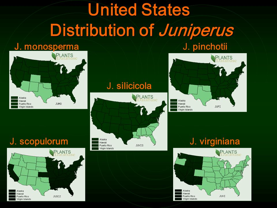 United States Distribution of Juniperus J. pinchotii J.