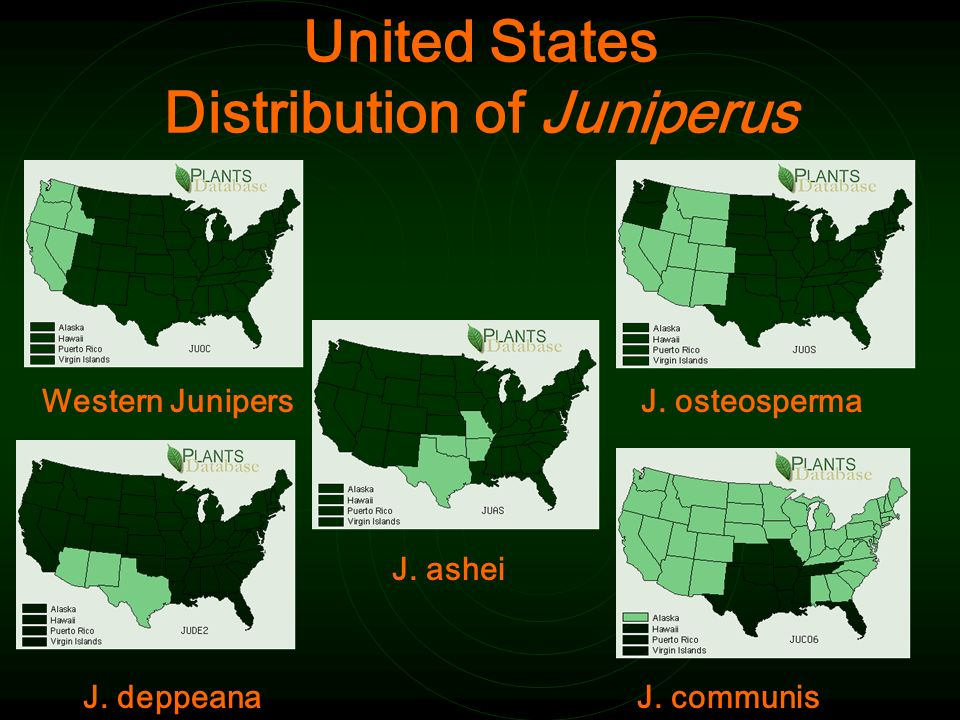 United States Distribution of Juniperus Western JunipersJ.