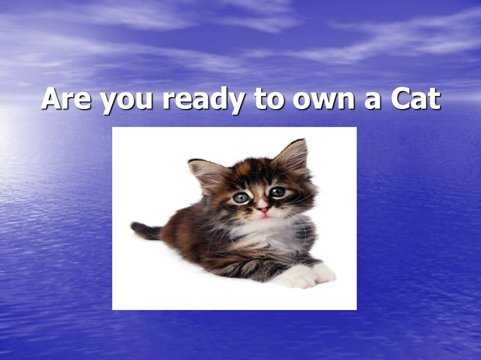 Are you ready to own a Cat