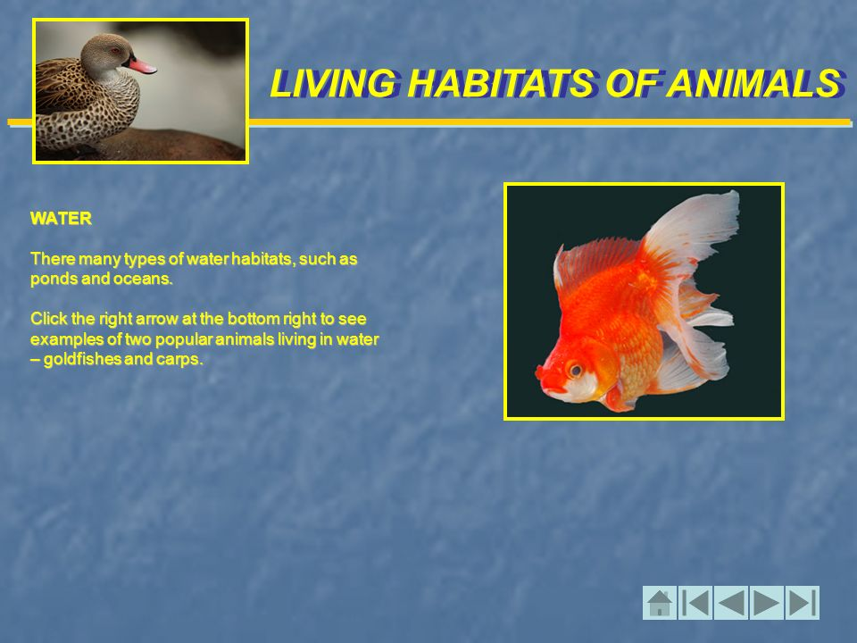 LIVING HABITATS OF ANIMALS WATER There many types of water habitats, such as ponds and oceans.