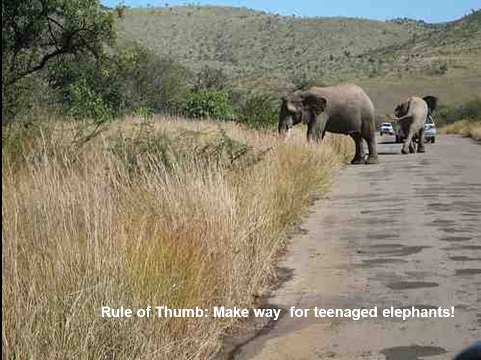 Rule of Thumb: Make way for teenaged elephants!