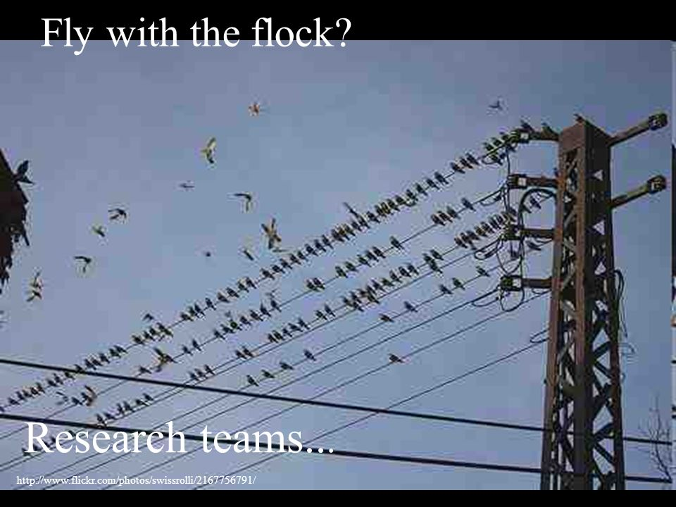 Fly with the flock? Research teams... http://www.flickr.com/photos/swissrolli/2167756791/