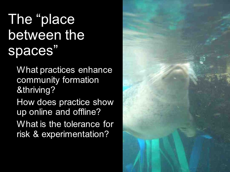 The place between the spaces What practices enhance community formation &thriving? How does practice show up online and offline? What is the tolerance