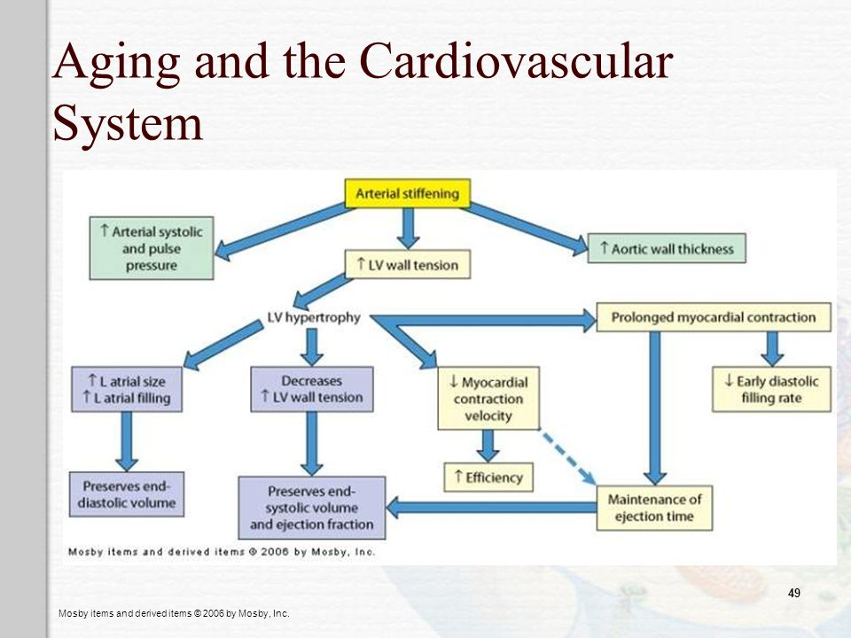 Mosby items and derived items © 2006 by Mosby, Inc. 49 Aging and the Cardiovascular System