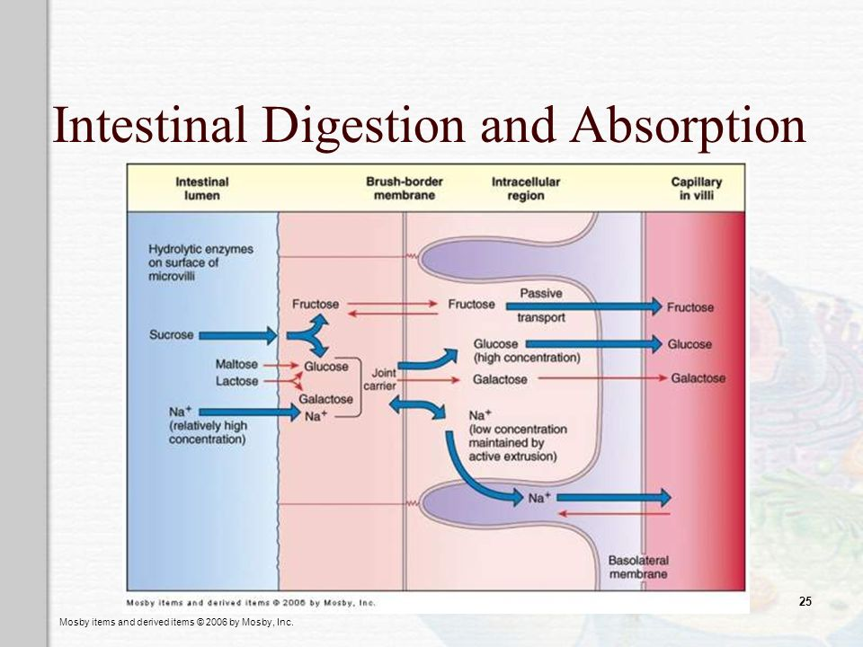 Mosby items and derived items © 2006 by Mosby, Inc. 25 Intestinal Digestion and Absorption