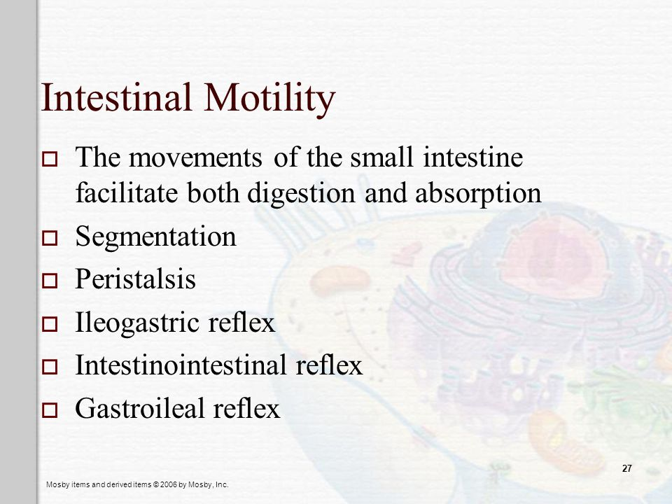 Mosby items and derived items © 2006 by Mosby, Inc. 27 Intestinal Motility The movements of the small intestine facilitate both digestion and absorpti