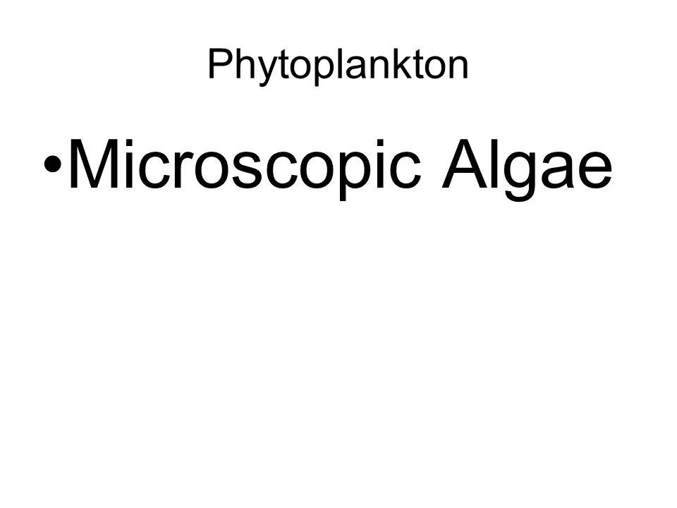 Phytoplankton Microscopic Algae