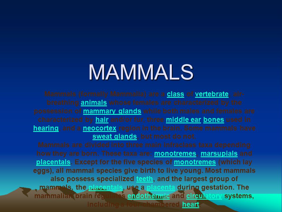 MAMMALS Mammals (formally Mammalia) are a class of vertebrate, air- breathing animals whose females are characterized by the possession of mammary glands while both males and females are characterized by hair and/or fur, three middle ear bones used in hearing, and a neocortex region in the brain.