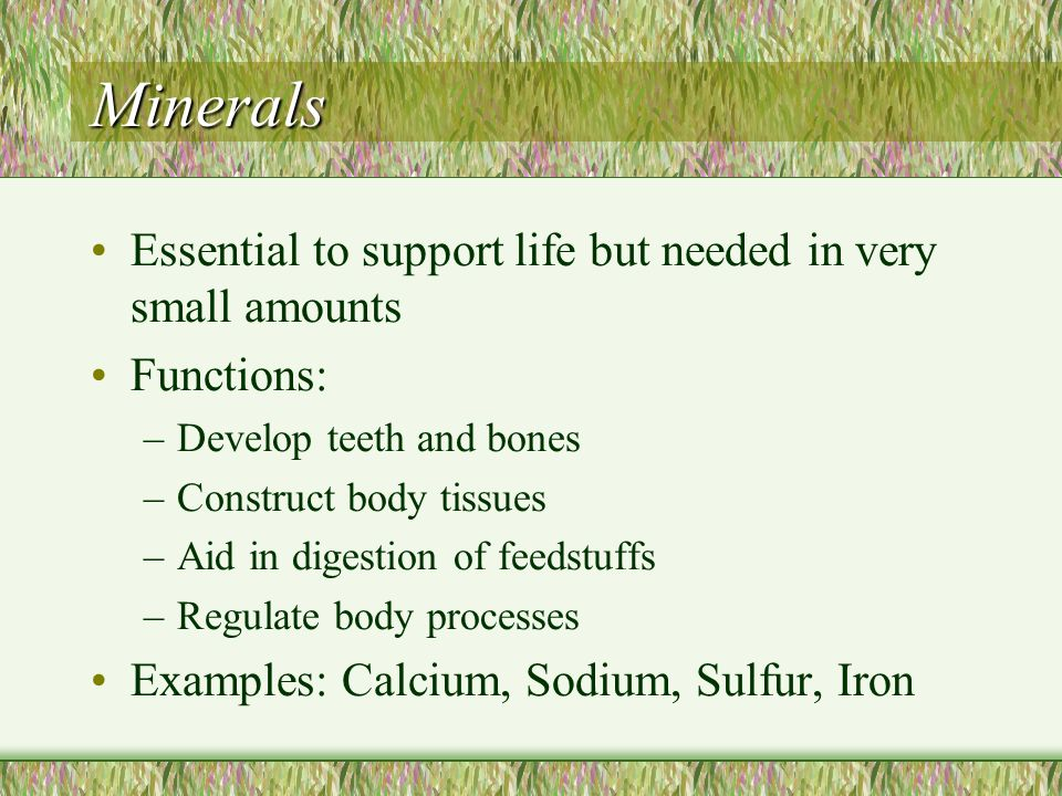 Minerals Essential to support life but needed in very small amounts Functions: –Develop teeth and bones –Construct body tissues –Aid in digestion of f