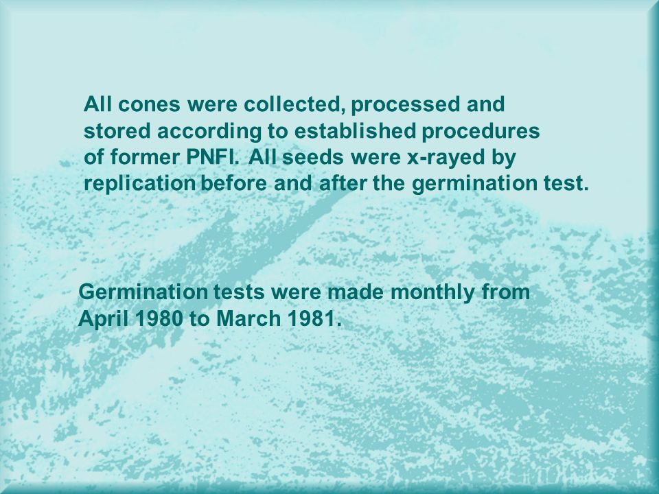 All cones were collected, processed and stored according to established procedures of former PNFI. All seeds were x-rayed by replication before and af