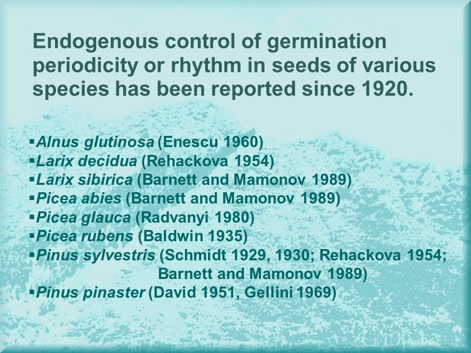 Endogenous control of germination periodicity or rhythm in seeds of various species has been reported since 1920. Alnus glutinosa (Enescu 1960) Larix