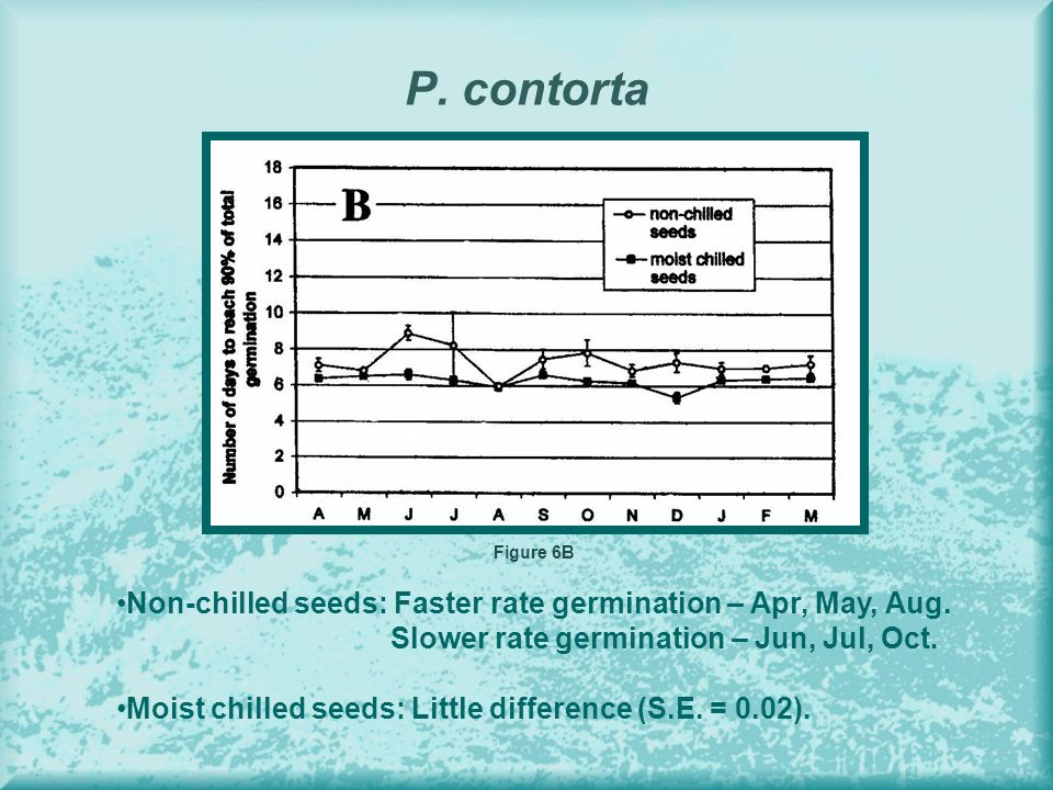 P. contorta Figure 6B Non-chilled seeds: Faster rate germination – Apr, May, Aug. Slower rate germination – Jun, Jul, Oct. Moist chilled seeds: Little