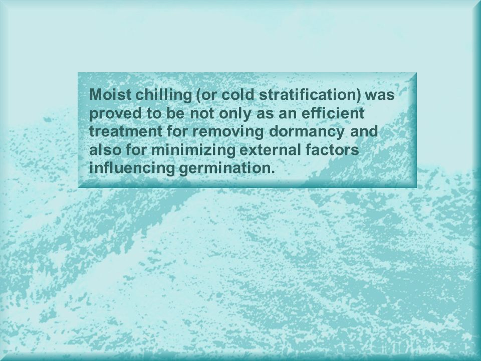 Moist chilling (or cold stratification) was proved to be not only as an efficient treatment for removing dormancy and also for minimizing external factors influencing germination.