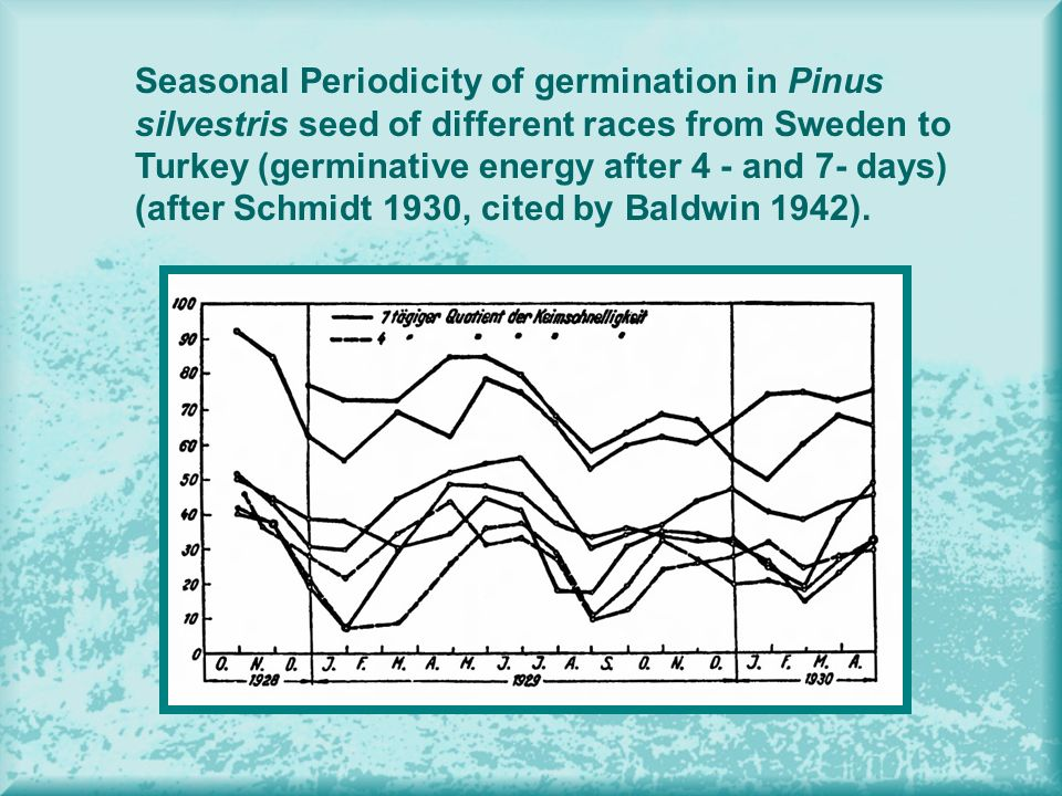 Seasonal Periodicity of germination in Pinus silvestris seed of different races from Sweden to Turkey (germinative energy after 4 - and 7- days) (after Schmidt 1930, cited by Baldwin 1942).