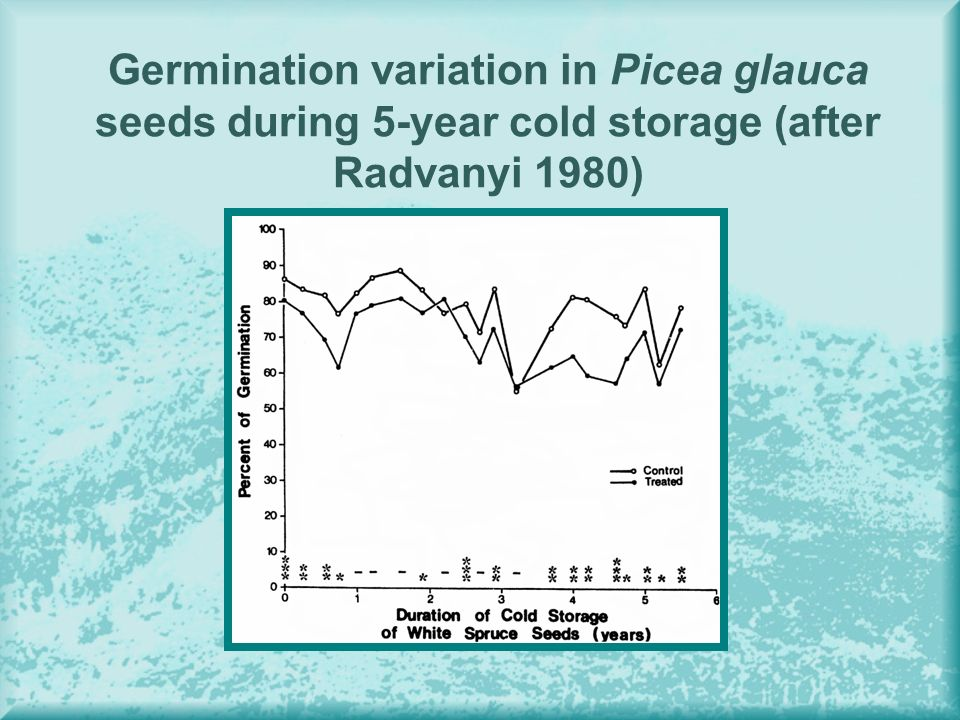 Germination variation in Picea glauca seeds during 5-year cold storage (after Radvanyi 1980)