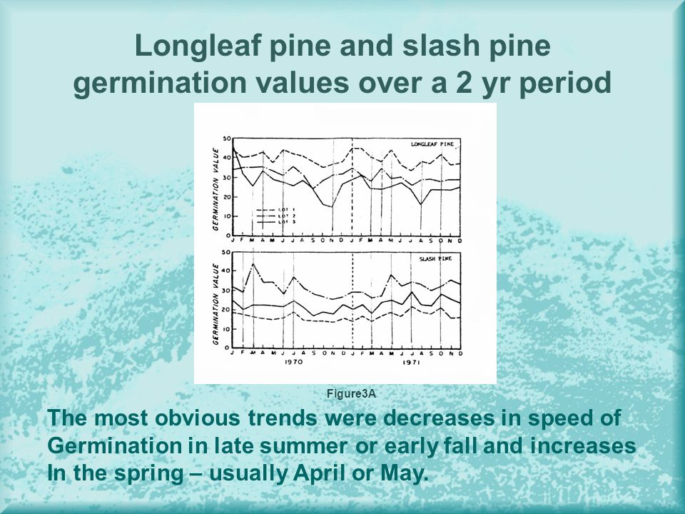 Longleaf pine and slash pine germination values over a 2 yr period The most obvious trends were decreases in speed of Germination in late summer or early fall and increases In the spring – usually April or May.