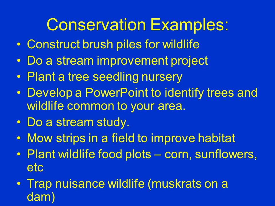 Conservation Examples: Build, erect and monitor bird boxes Place bird feeders and maintain a log of birds seen Plant a butterfly garden Make casts of