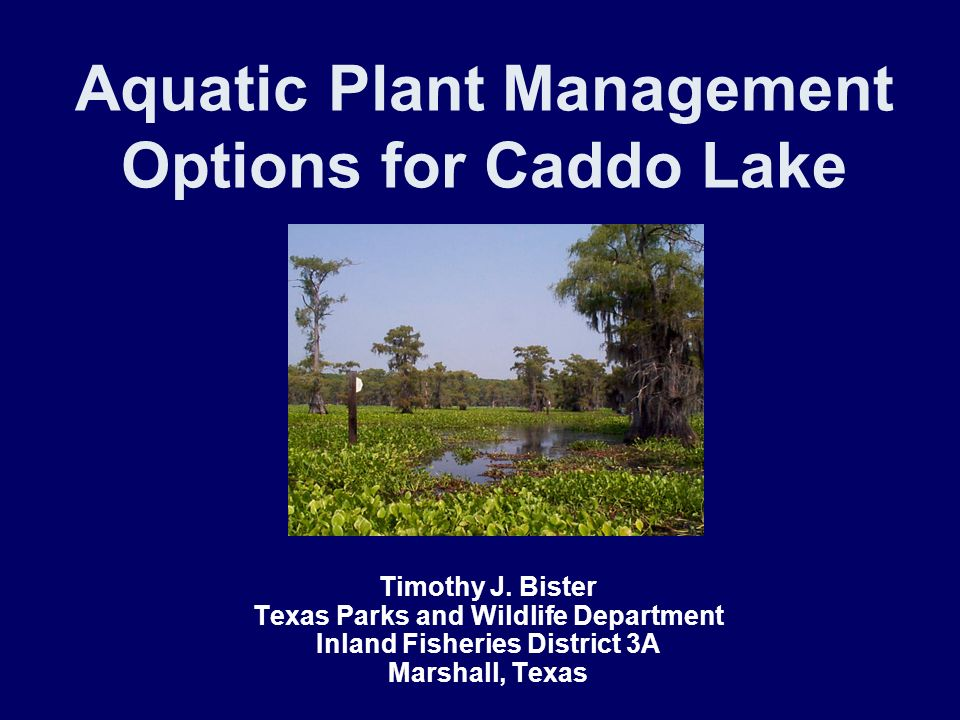 Aquatic Plant Management Options for Caddo Lake Timothy J. Bister Texas Parks and Wildlife Department Inland Fisheries District 3A Marshall, Texas