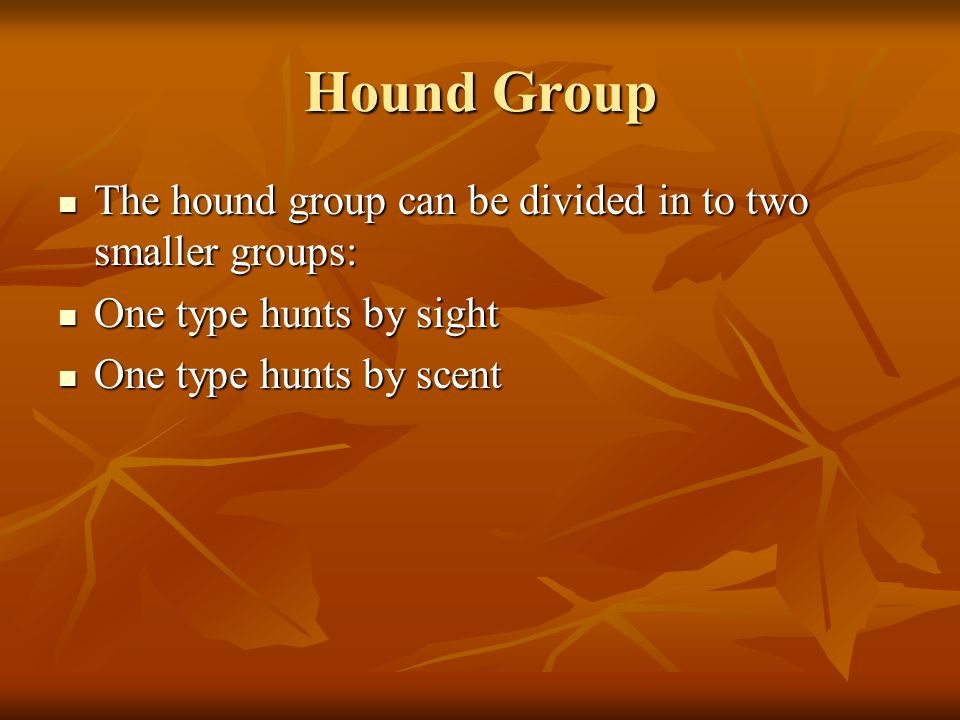 Hound Group The hound group can be divided in to two smaller groups: The hound group can be divided in to two smaller groups: One type hunts by sight