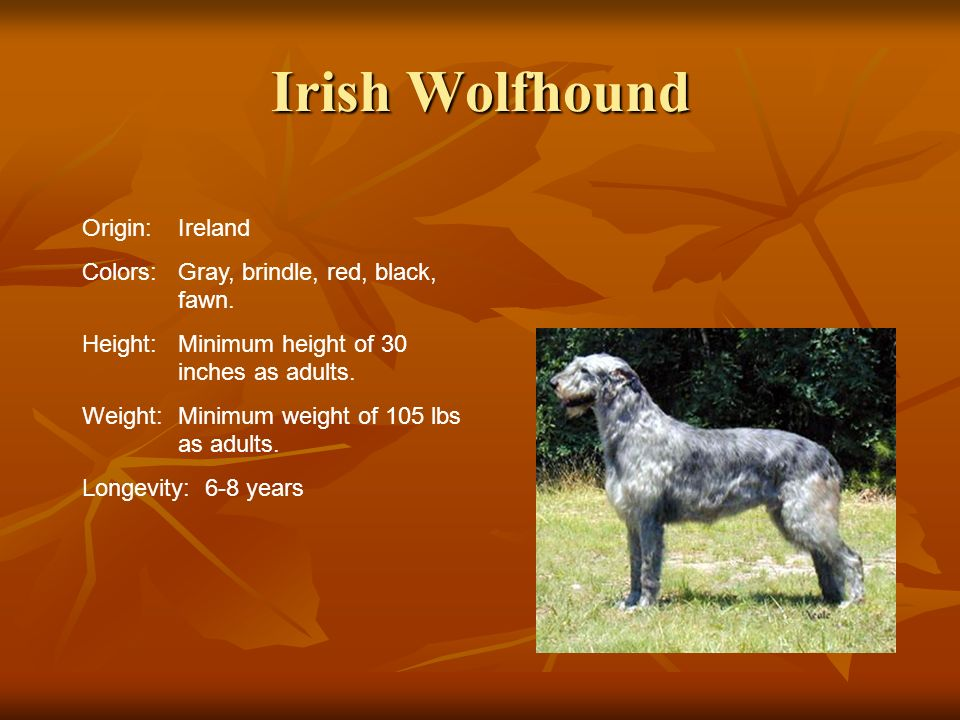 Irish Wolfhound Origin:Ireland Colors:Gray, brindle, red, black, fawn. Height:Minimum height of 30 inches as adults. Weight:Minimum weight of 105 lbs