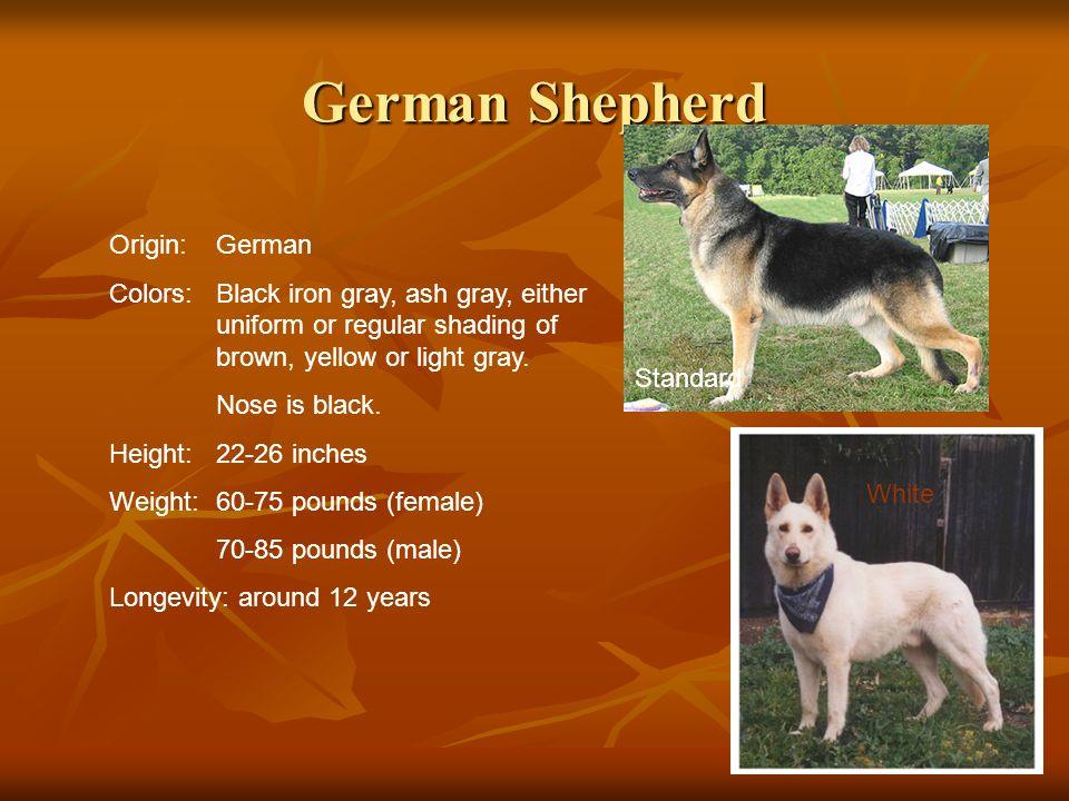 German Shepherd Origin:German Colors:Black iron gray, ash gray, either uniform or regular shading of brown, yellow or light gray. Nose is black. Heigh