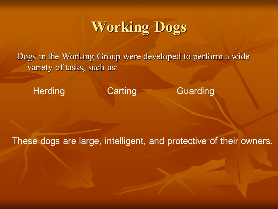 Working Dogs Dogs in the Working Group were developed to perform a wide variety of tasks, such as: These dogs are large, intelligent, and protective o