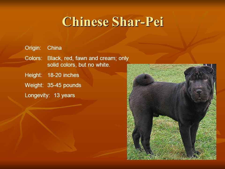 Chinese Shar-Pei Origin:China Colors:Black, red, fawn and cream; only solid colors, but no white. Height:18-20 inches Weight:35-45 pounds Longevity: 1