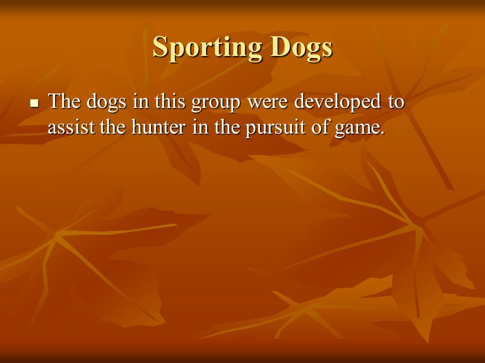 Sporting Dogs The dogs in this group were developed to assist the hunter in the pursuit of game. The dogs in this group were developed to assist the h