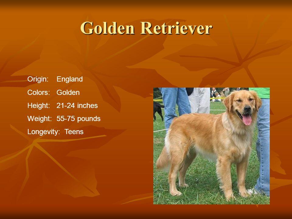 Golden Retriever Origin:England Colors:Golden Height:21-24 inches Weight:55-75 pounds Longevity: Teens