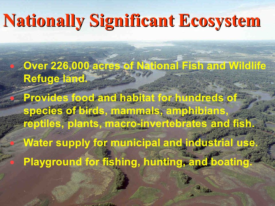 12 Over 226,000 acres of National Fish and Wildlife Refuge land. Provides food and habitat for hundreds of species of birds, mammals, amphibians, rept