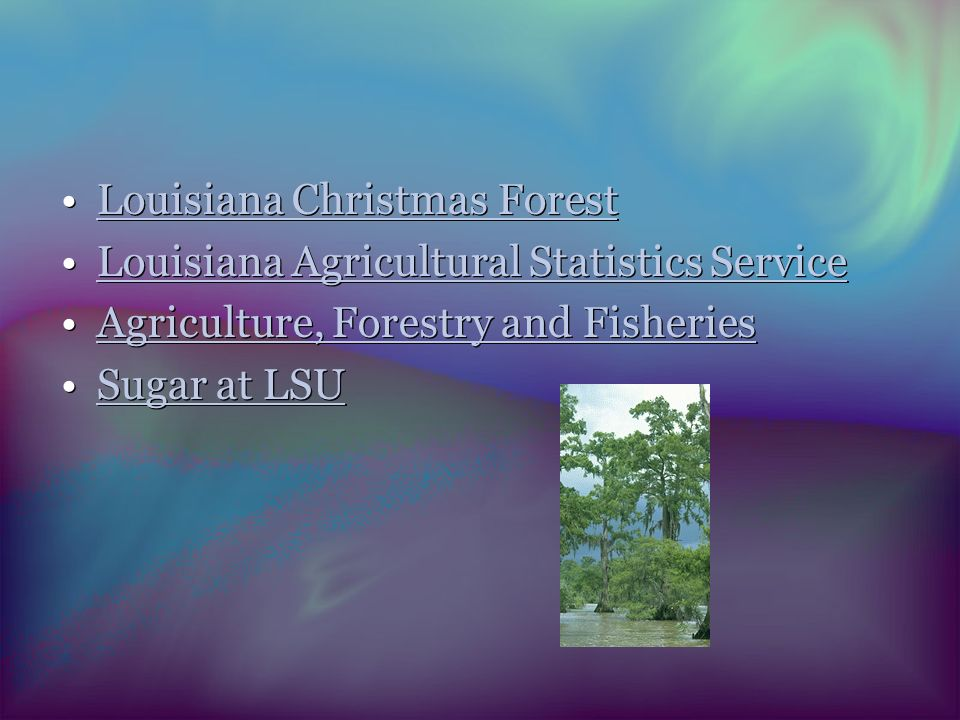 Louisiana Christmas Forest Louisiana Agricultural Statistics Service Agriculture, Forestry and Fisheries Sugar at LSU Louisiana Christmas Forest Louisiana Agricultural Statistics Service Agriculture, Forestry and Fisheries Sugar at LSU